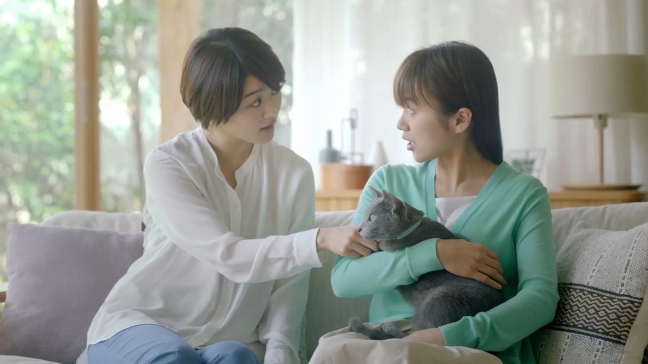 フロントライン プラス 家ネコ篇 安藤裕美 真下玲奈